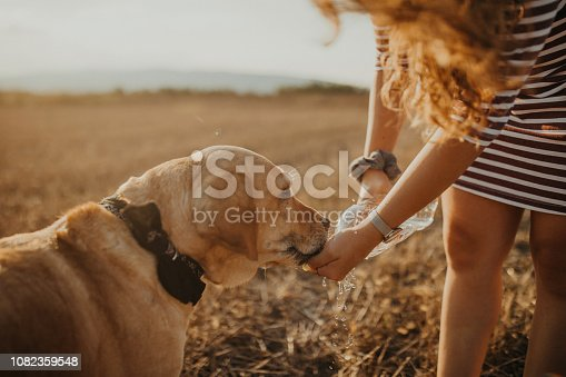 Photo of Labrador retriever drinking water from a bottle