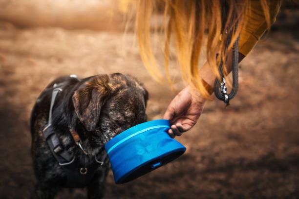 Durstig Schäferhund Hund Welpe trinkt Wasser aus einem Hundenapf von Frau, die ihm gegeben – Foto
