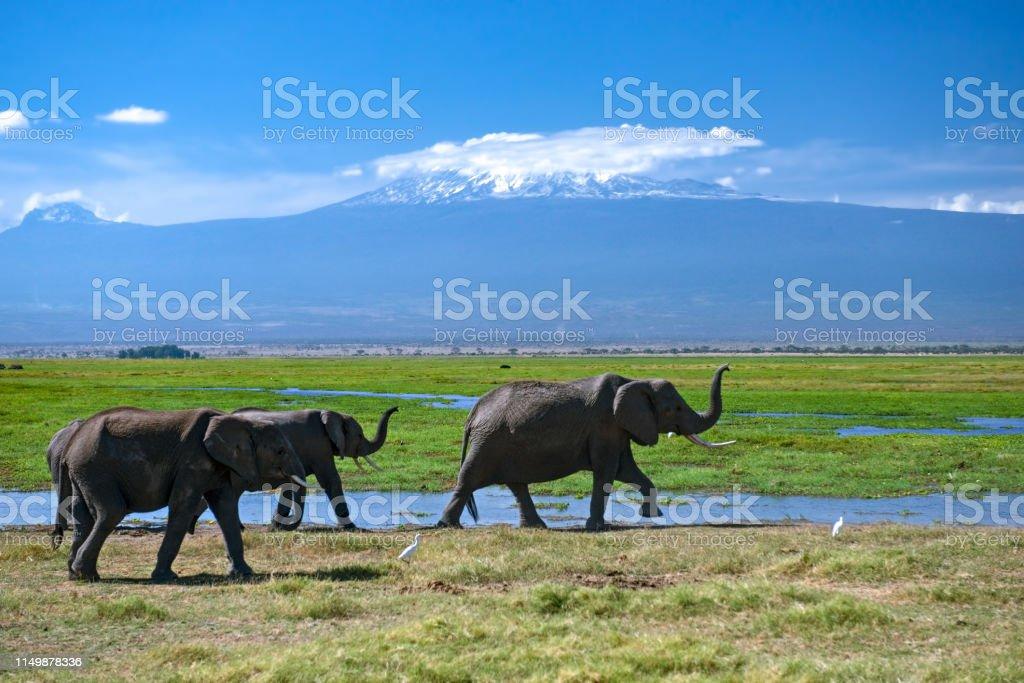 Thirsty herd of elephants stock photo