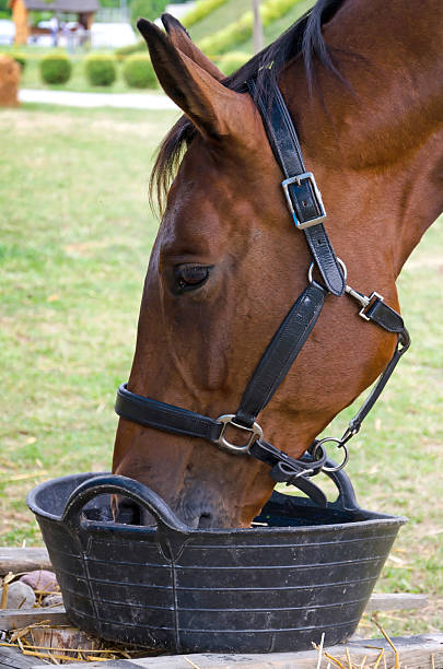 Thirsty horse stock photo
