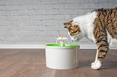 Thirsty tabby cat drinking water from a pet drinking fountain. Side view with copy space.