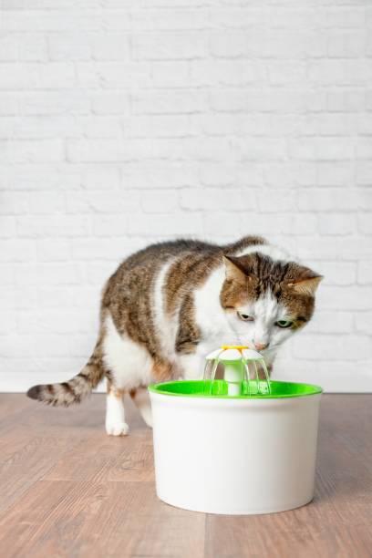 durstig tabbykatze trinkwasser aus einem haustier trinkbrunnen. hochformat mit textfreiraum - indoor wasserbrunnen stock-fotos und bilder