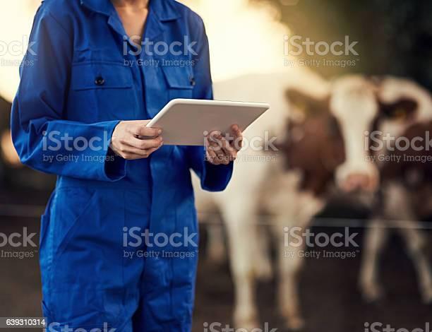 Diese Rinderzählerapp Ist Wirklich Nützlich Stockfoto und mehr Bilder von Digital generiert