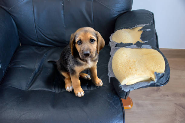 這只狗必須接受教育 - 咬 個照片及圖片檔
