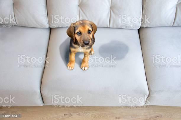 This dog has to be educated picture id1132148411?b=1&k=6&m=1132148411&s=612x612&h=0lgmnrqdwlbtgl3v7mfnll5ypvj5 jcucukvonhyhhk=
