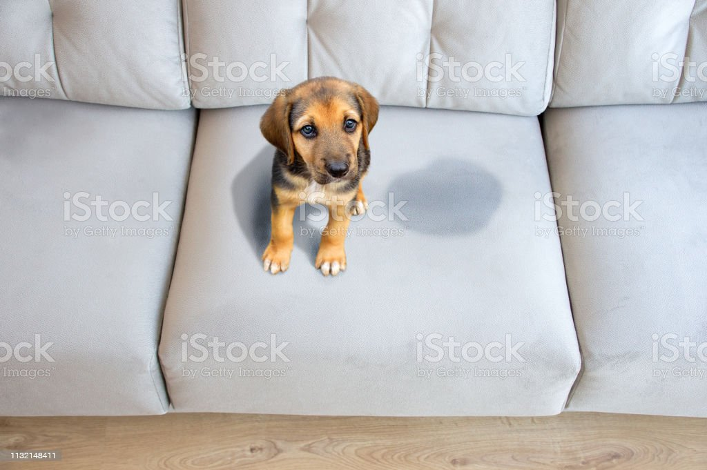 This dog has to be educated stock photo