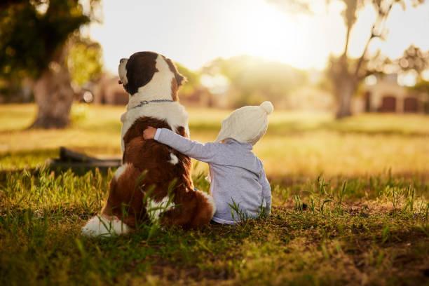 this giant has a gentle heart - bambino cane foto e immagini stock