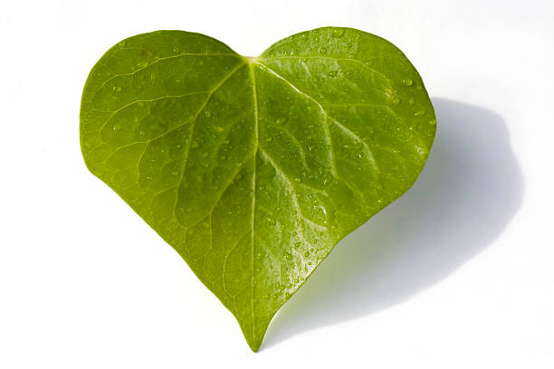 this icon is eco-friendly! - recycling heart bildbanksfoton och bilder