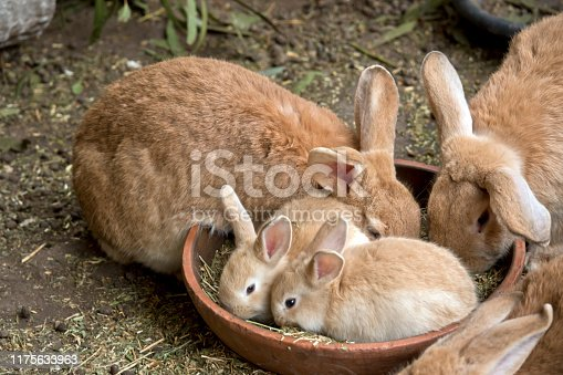 the bunnies are eating straw out of a bowl