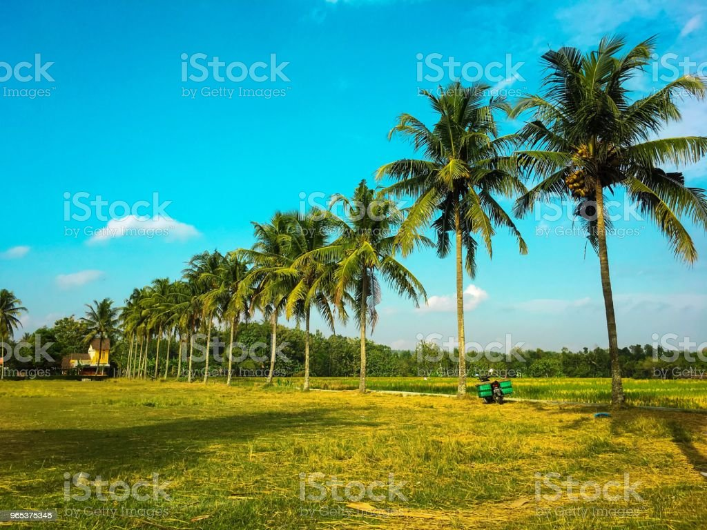 This is a field not a beach royalty-free stock photo