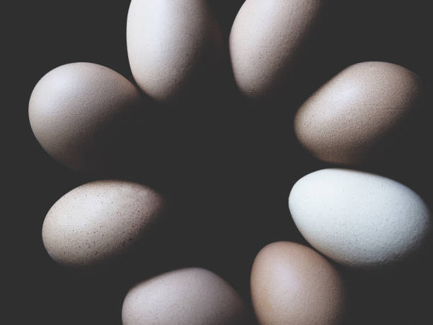 This is chicken egg in black background, soft tone stock photo