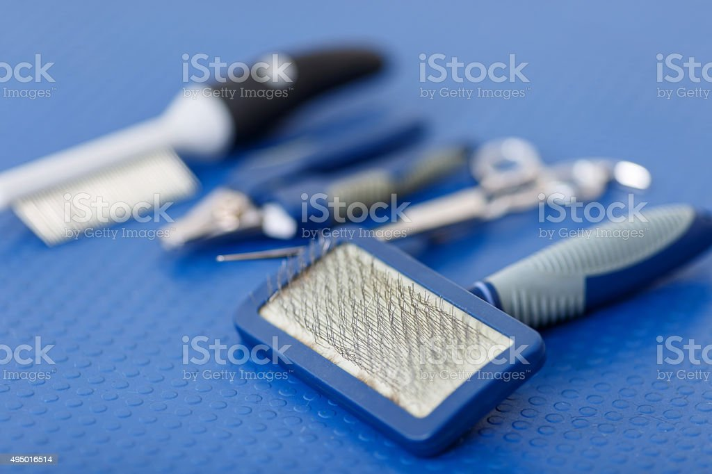 This is how dog grooming tools look like stock photo