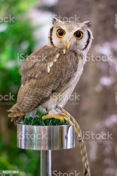 This is owl picture id895920964?b=1&k=6&m=895920964&s=612x612&h=w1qvq2vglesiesanwe3sufqypbp1xwgipzlj61js xm=