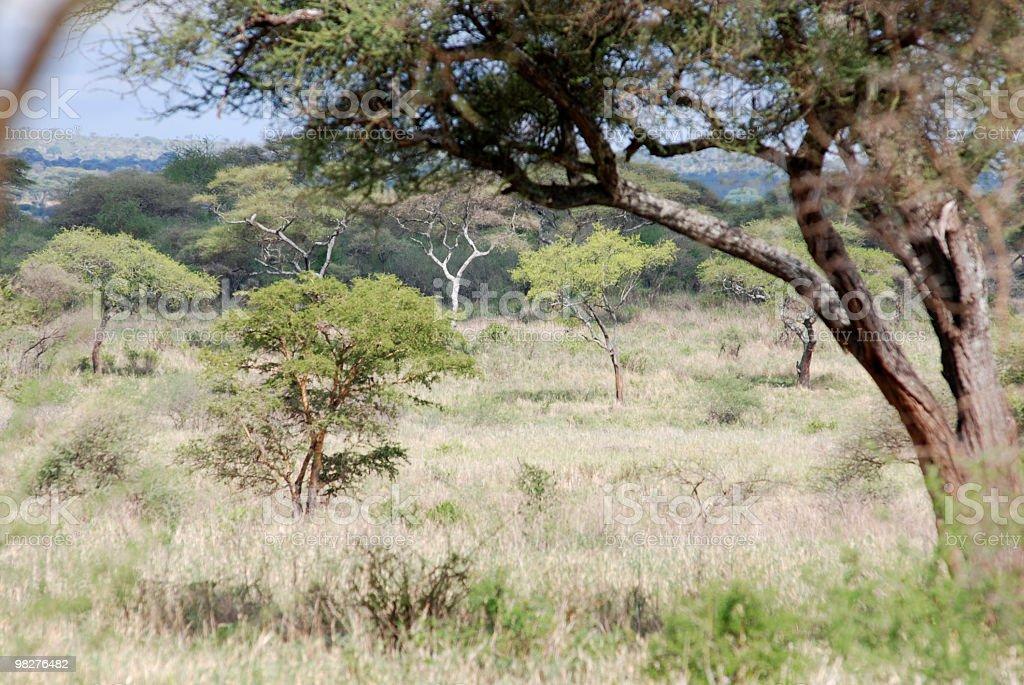 This is Tarangire National Park, Tanzania royalty-free stock photo