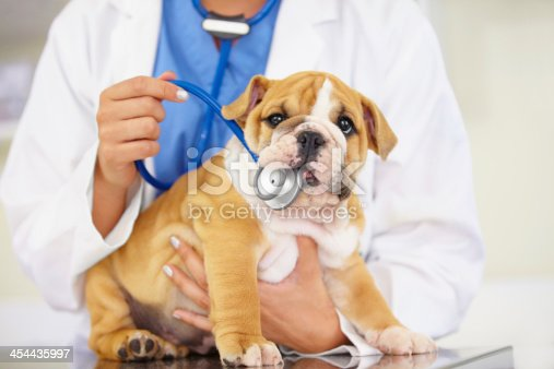 Cropped shot of a vet trying to listen to a bulldog puppy's heartbeat