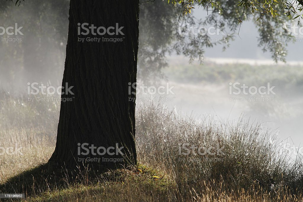 Willow tree trunk by misty autumn river background royalty-free stock photo