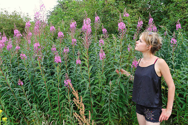 outdoor girl in wildflower meadow pink fireweed mitcham common - whiteway english outdoor girl stock photos and pictures