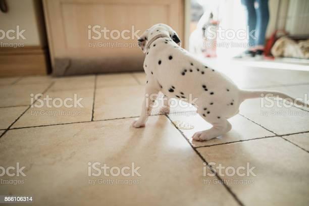 This puppy needs toilet training picture id866106314?b=1&k=6&m=866106314&s=612x612&h=mxbidchgd xnuisecxqgdogcgezlbrbatra0kgbpf70=