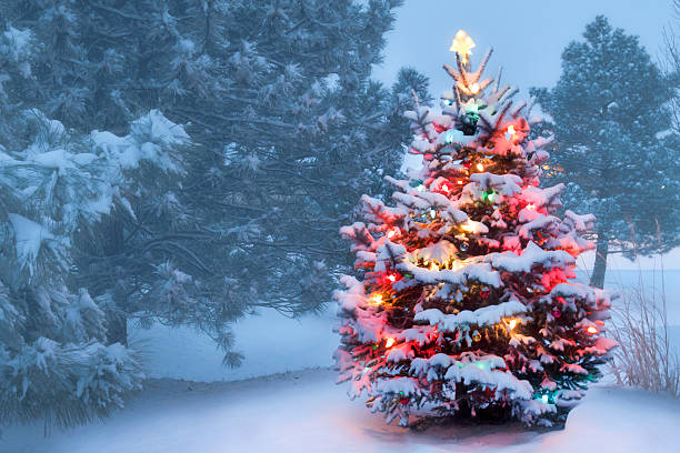 this tree glows brightly on snow covered foggy christmas morning stock photo - Snow Covered Christmas Trees