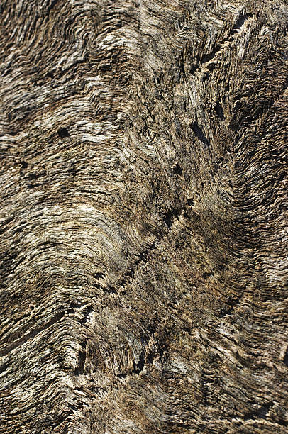 close-woven wood texture from felled tree trunk - whiteway stock photos and pictures