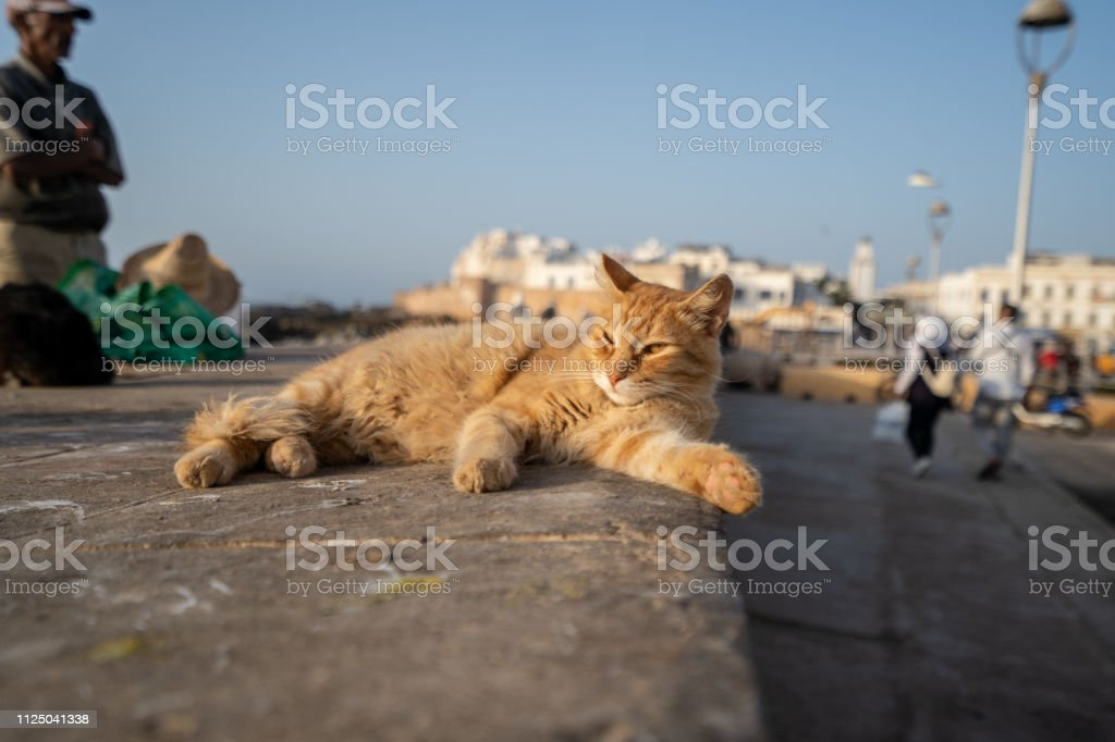 This yellow cat is enjoying the sun at the harbor of Essaouira, Morocco stock photo