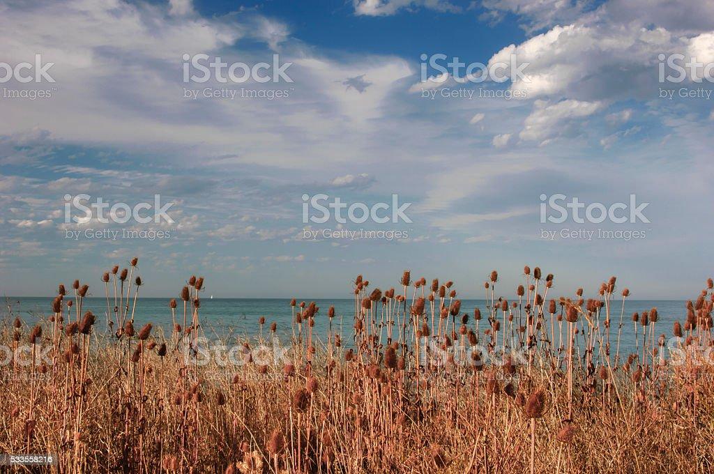 Cardo plantas, vista al mar y las nubes - foto de stock