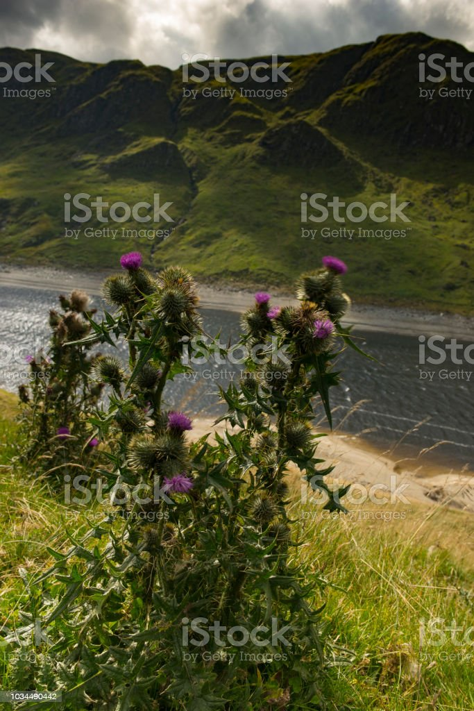 Thistles in the Breeze by a Loch Surrounded by Mountains stock photo