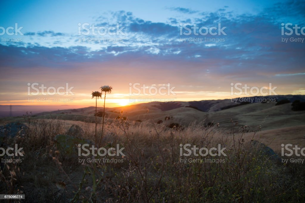 Thistles on a Mountaintop at Sunset stock photo