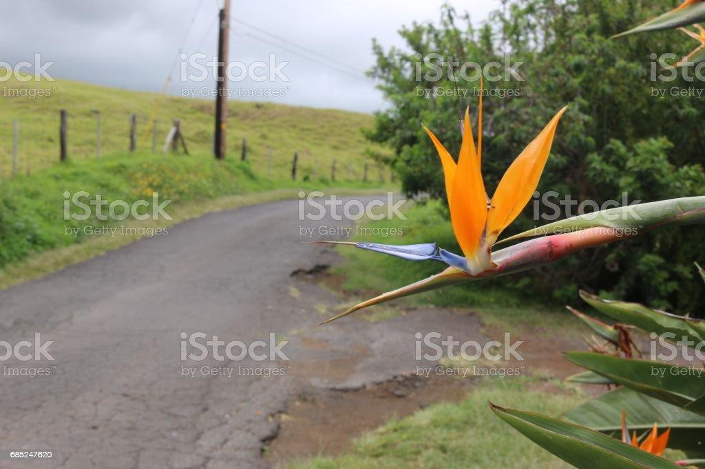 Thompson Road on Maui, Hawaii royalty-free stock photo