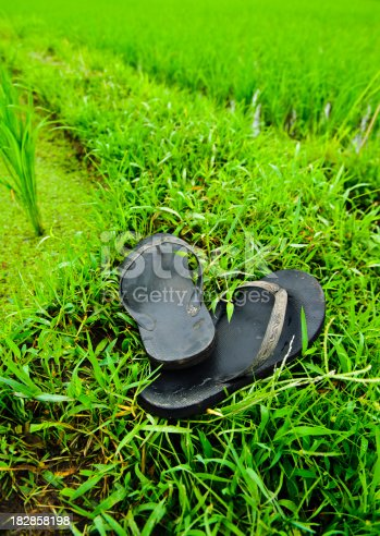 istock Thongs by Rice paddys in Ubud Bali Indonesia 182858198