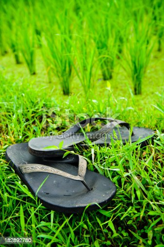 istock Thongs by Rice paddys in Ubud Bali Indonesia 182892780