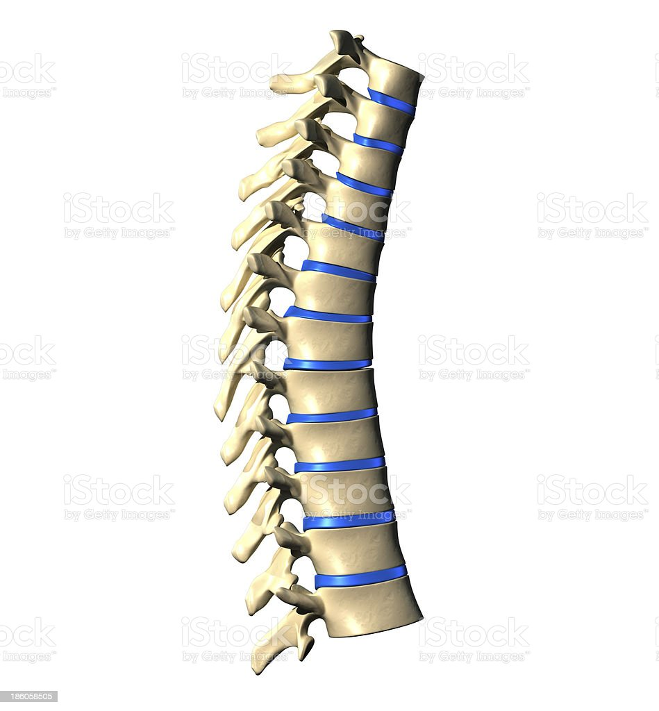 Thoracic Spine - Lateral view royalty-free stock photo