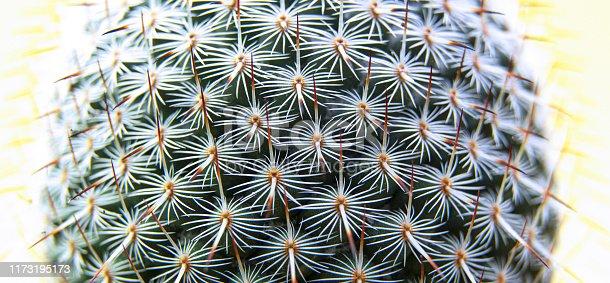 909651510istockphoto thorn cactus texture background, close up. 1173195173