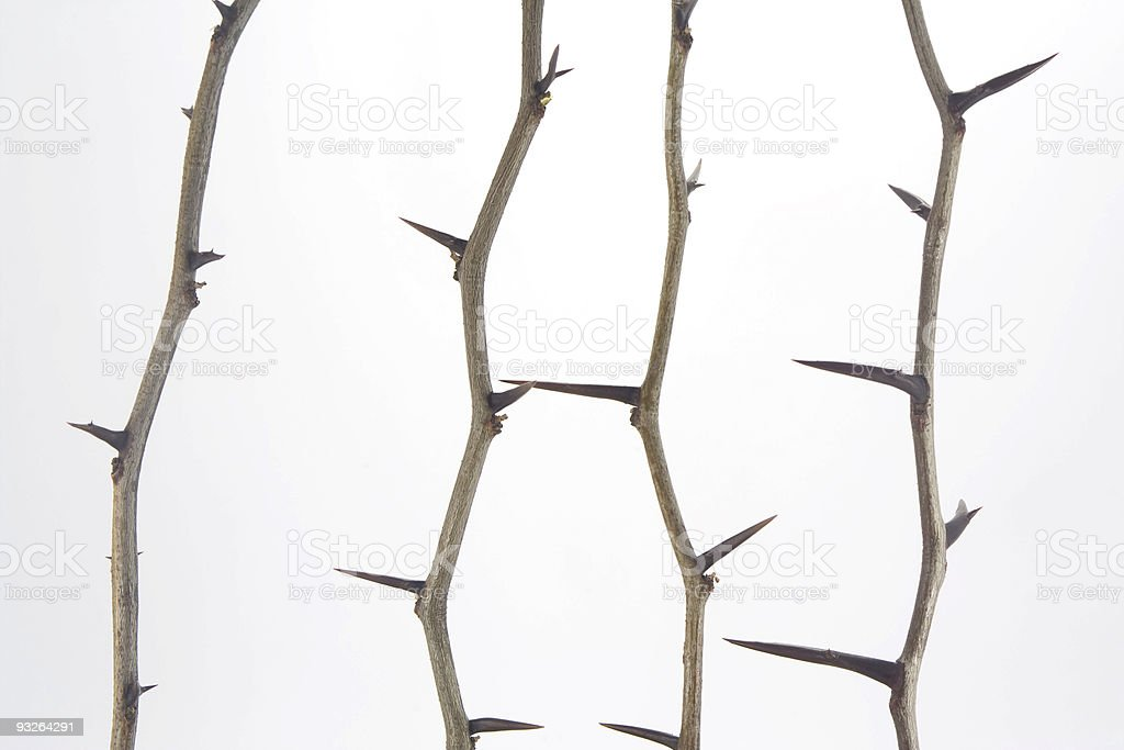 Thorn fence stock photo