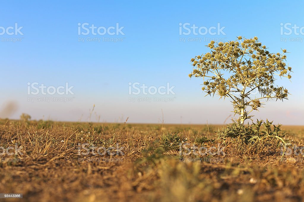 Thorn in der steppe Lizenzfreies stock-foto