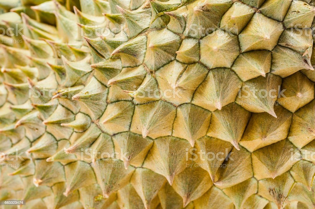 Thorn of Durian the most popular thai fruit in closeup shot royalty-free stock photo