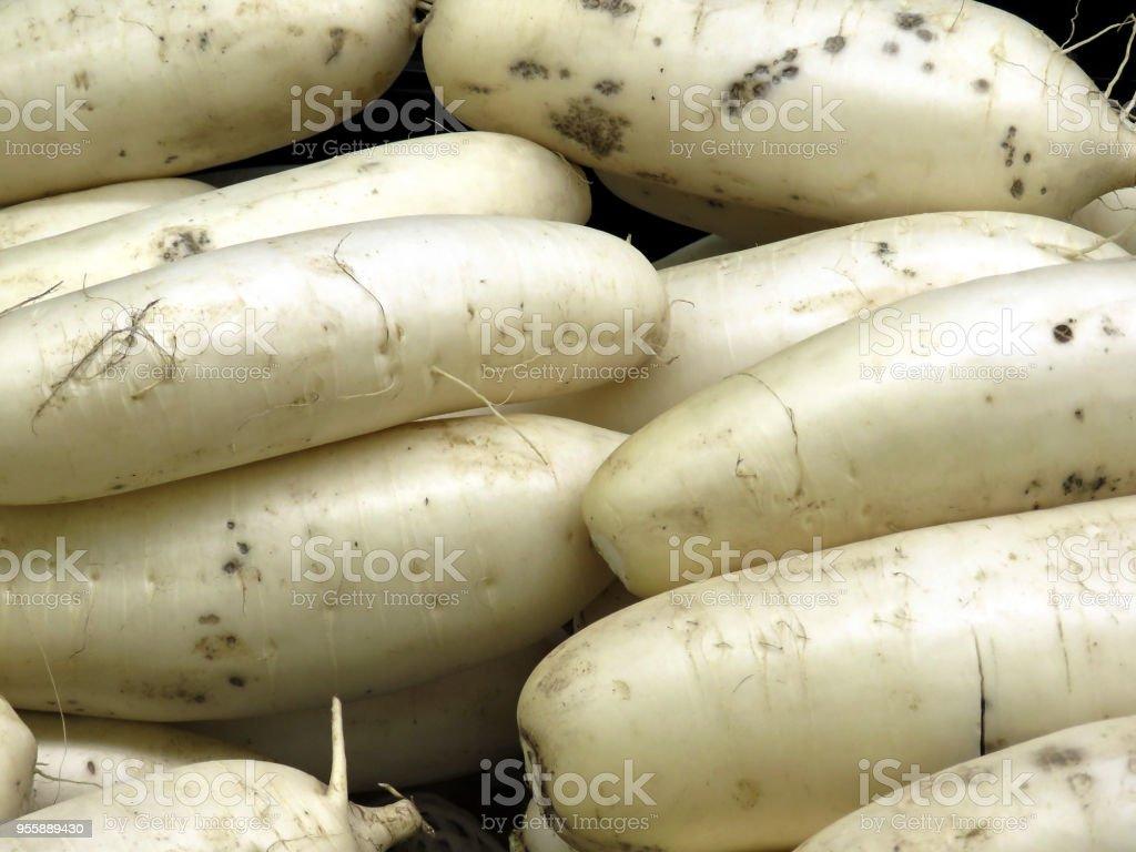Thornhill Chinese White Radish 2018 Stock Photo & More