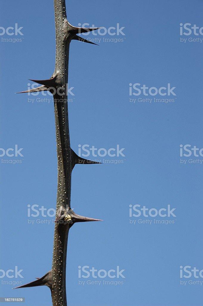 Thorns against Sky stock photo