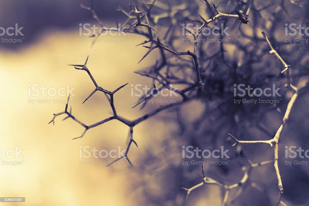 Thorns, bushes, branches. stock photo