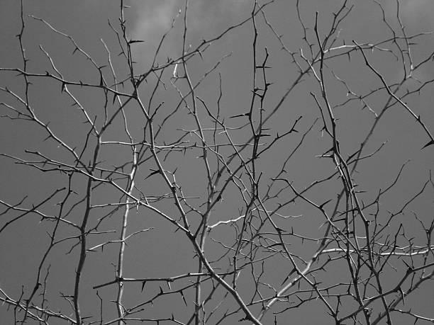 Thorns in Black & White stock photo