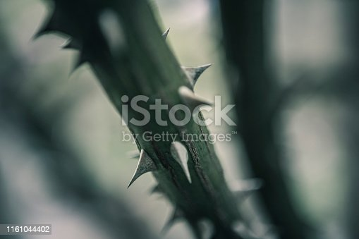 Abstract Macro of thorns on a flower stem