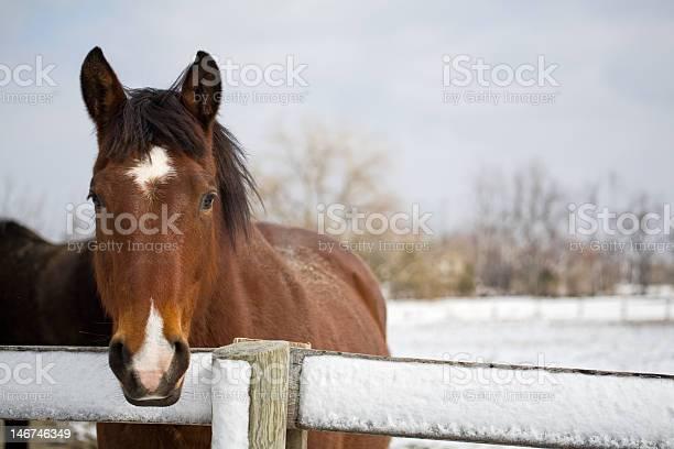 Thoroughbred horse at fence in winter picture id146746349?b=1&k=6&m=146746349&s=612x612&h=u6y0rz2uewxbgfefptinssav5i4aefknkdr0sb84xss=