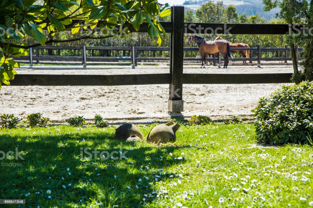 Thoroughbred Horse in Manege stock photo