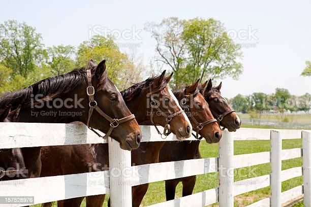 Photo of Thoroughbred Racehorses