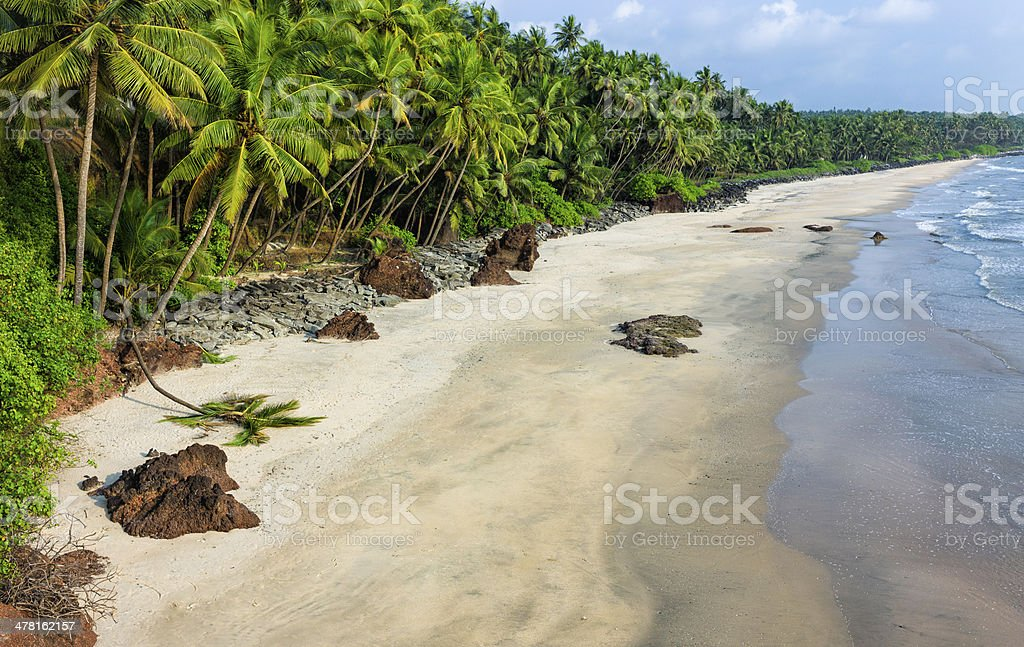 Thottada beach lined with coconut palms, Kannur, Kerala, India. royalty-free stock photo