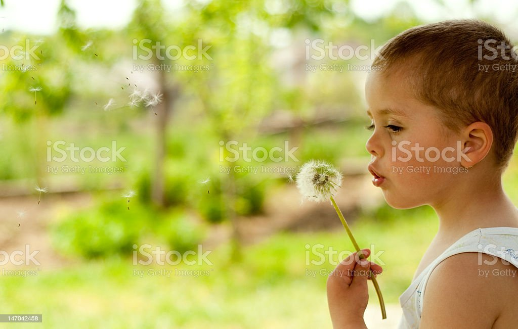 Thoughtful Dandelion royalty-free stock photo