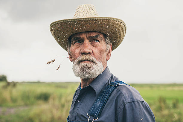 Thoughtful senior farmer chewing grass stock photo