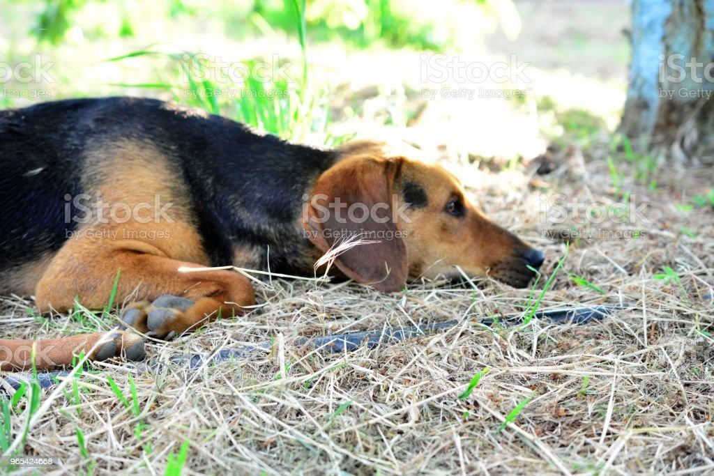 thoughtful stray dog royalty-free stock photo