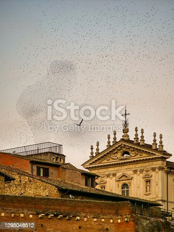Thousands of birds gathered in large flocks create geometric shapes in the skies of the historic center of Rome, flying over a church near the Roman Forum and the Campidoglio at sunset. Image in High Definition format.
