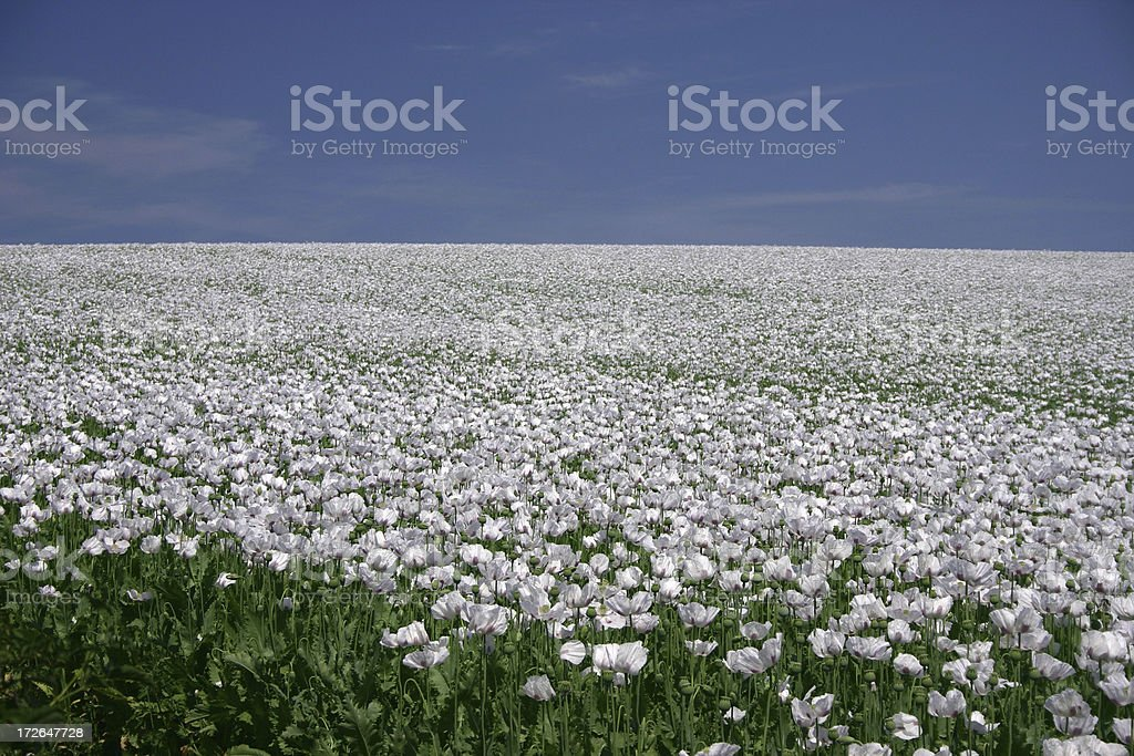 thousands of flowers royalty-free stock photo